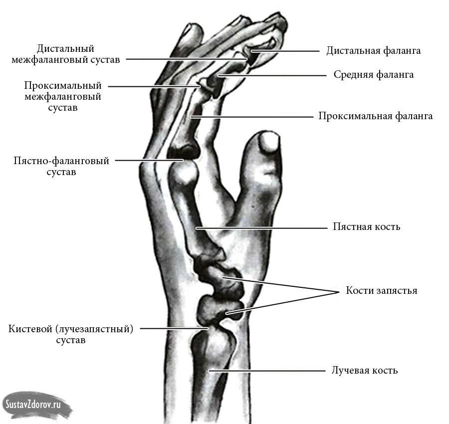 воспаление колена чем лечить