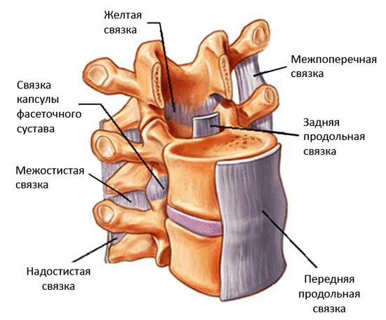 fibroznoe-koltco2