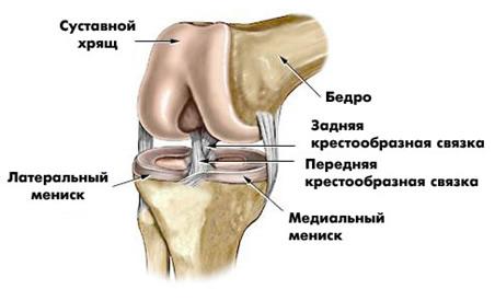 Внутренний мениск коленного сустава