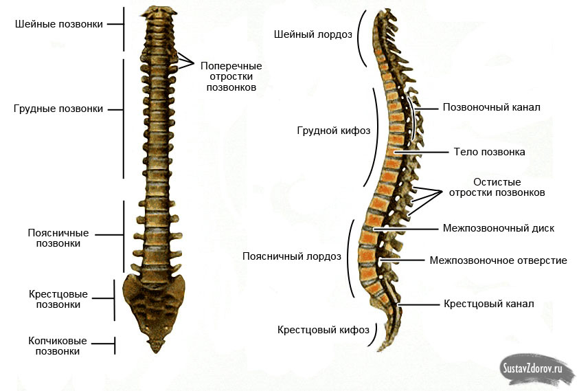 Болит левая сторона боль отдает в спину