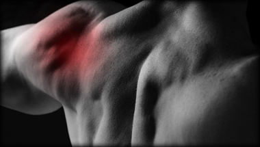 характеристика плечевого сустава