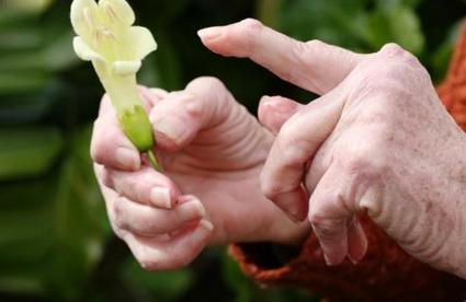Лечение артрита народными средствами: проверенные рецепты
