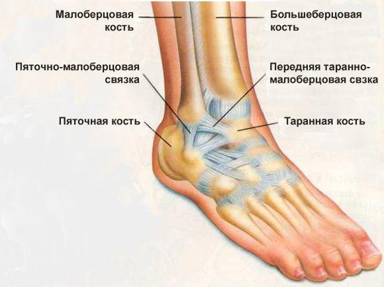 Болит сустав голеностопа лечение коленных суставов морской солью