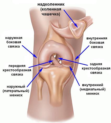 Диагностика повреждение мениска коленного сустава туттор локтевого сустава