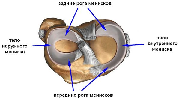Связка надколенника и е особенности укорочение шов дегенеративные изменения и смещения