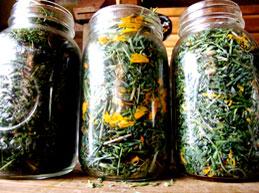 сушеные травы в банке