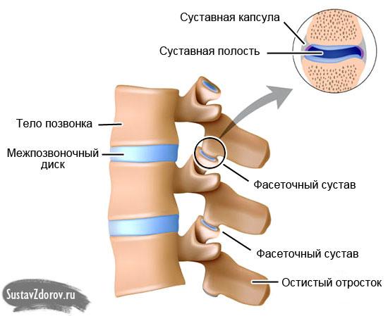 фасеточные суставы