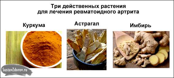 три растения для лечения ревматоидного полиартрита