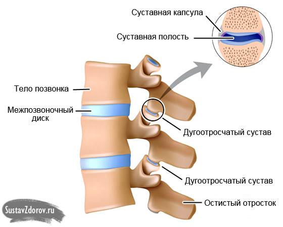 Изображение - Артроз дугоотросчатых суставов реберно позвоночных сочленений duga-joints-illustration