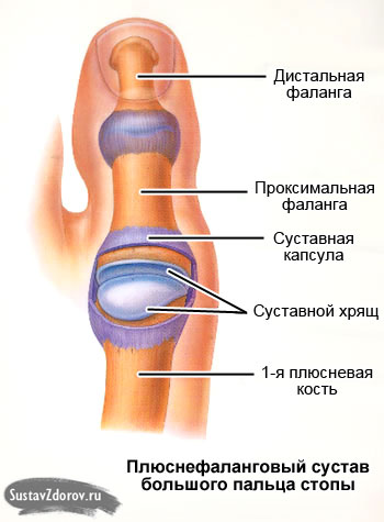 плюснефаланговый сустав большого пальца стопы