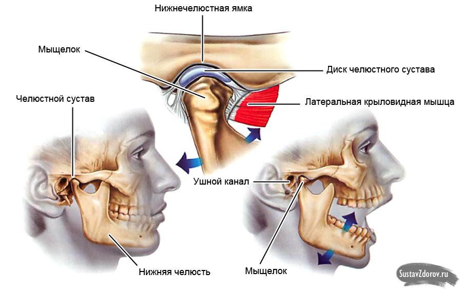 Воспаление нижнечелюстного сустав артроскопия коленного сустава грн