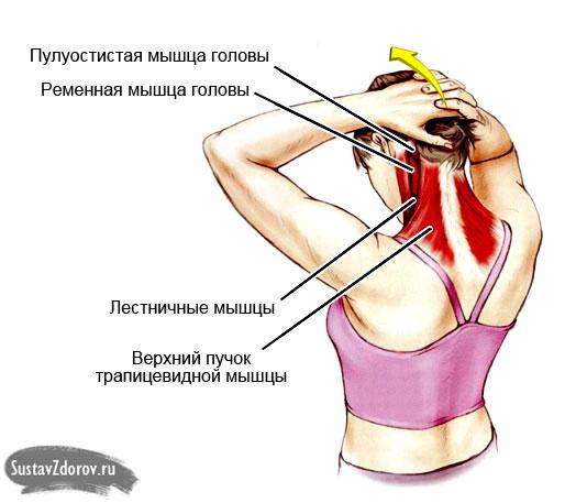 выполнение упражнения 3 блока №1 задействует все мышцы шеи