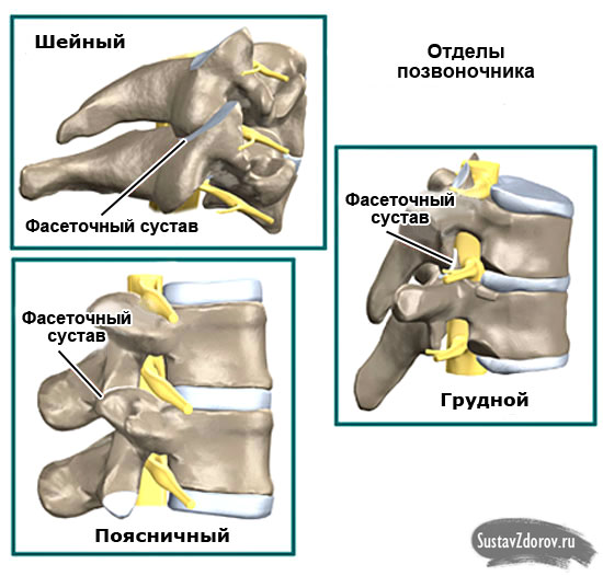 дугоотросчатые суставы в шейном, грудном и поясничном отделе позвоночника