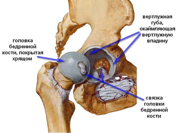 Лекарства от артроза тазобедренного сустава
