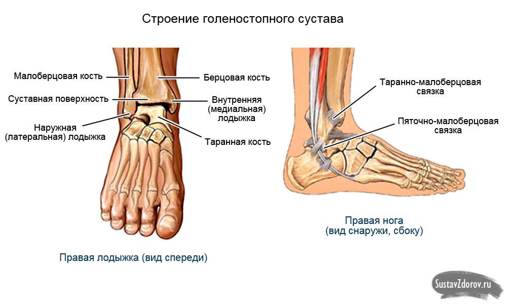 Потемневшая погрубевшая кожа на голеностопных и локтевых суставах ноют суставы рук и ног причины