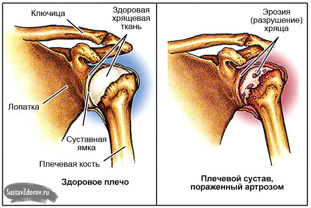 Лечение на шее у кота