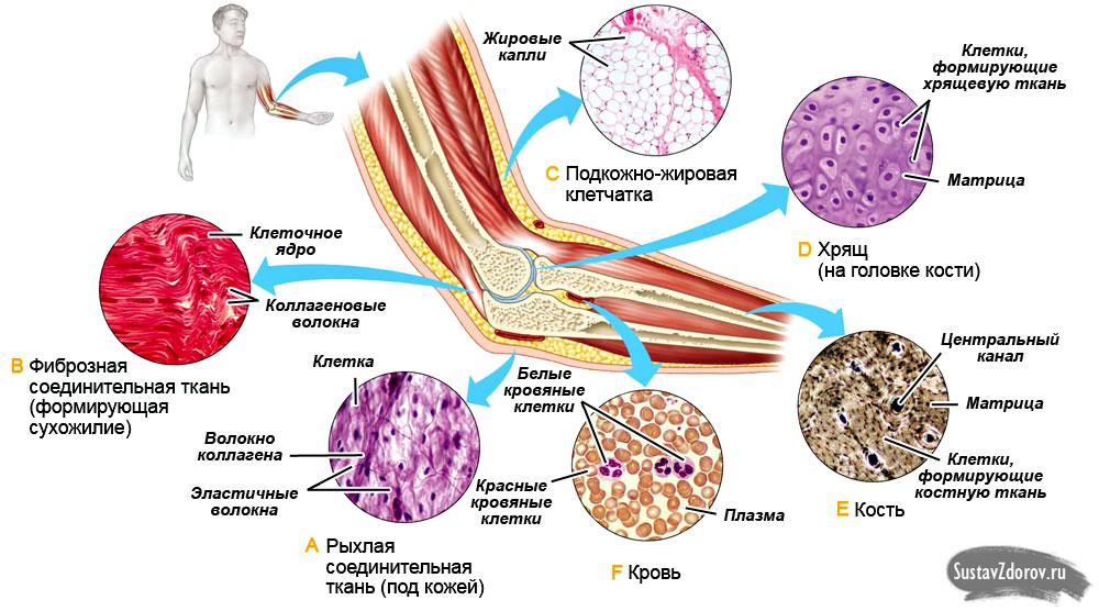 Желатин для лечения суставов противопоказания сустанон и суставы