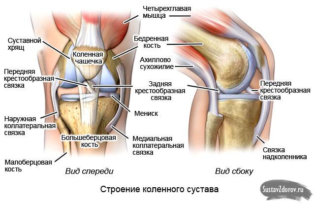 Разрыв мышц в коленном суставе дистрофические процессы в суставах