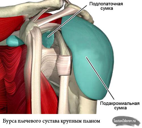 бурса плечевого сустава