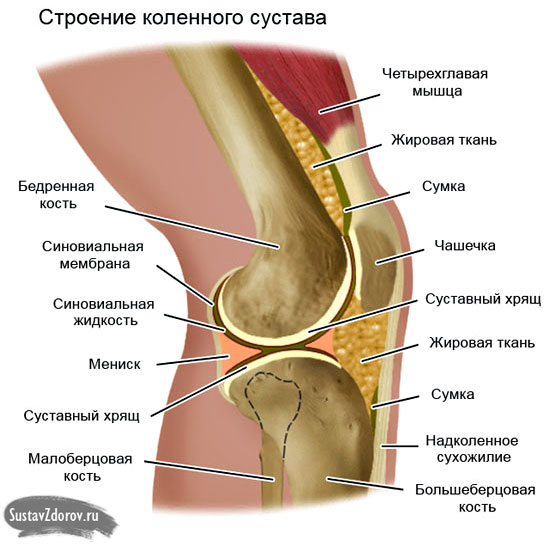 Отчего хрустят суставы колени курорт по лечению суставов в перми