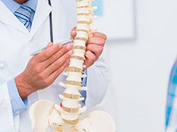 врач объясняет строение позвоночника пациенту